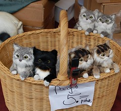 Kittens for sale ;-) (daaynos) Tags: cats pets cute netherlands animals rotterdam funny forsale sweet young kittens marketplace cheap inexpensive poesjes 20000views tekoop 30000views 10000views 40000views