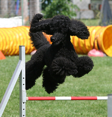 agility today