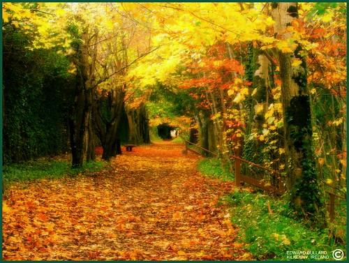 سحر الطبيعة في ايرلندا 520150189_c1e30ef3fd.jpg?v=1201246496