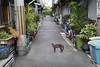 The alley where the cat lives (mokuu) Tags: alley 路地 cat 猫 brazier 火鉢 plants 植木