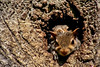 Let Me See...Let Me See...Come On...Let Me See!!! (mightyquinninwky) Tags: baby tree squirrels infant nest 5 kentucky lexingtonkentucky orphans lovelovelove frontyard knothole chevychase fontaineroad centralkentucky superhearts weened cenralkentucky urbanwildflife