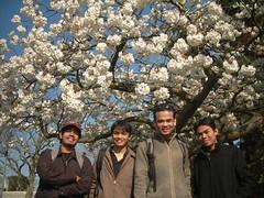 Para-Para Sakura kat National Botanic Garden
