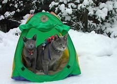 Camping Cats