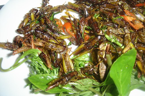 plate of hoppers