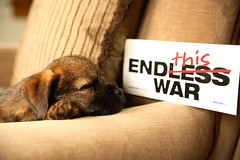 war is not healthy for puppies and other living things