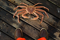opifeet (coreyfishes) Tags: ocean sea copyright snow color ice dutch weather norway alaska danger harbor photo fishing fisherman king all arnold picture wave crab corey commercial rights catch kingcrab discovery reserved harsh beringsea crabbing 2007 rollo bering snowcrab opilio deadliest deadliestcatch coreyarnoldcorey coreyfishes
