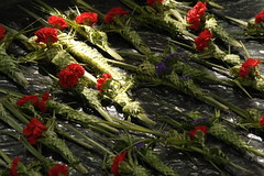 Ramos y Claveles (Esparta) Tags: flowers flores flower fleur flor blume fiore ramos claveles  mexico:state=guerrero mexico:estado=guerrero mexico:state=gro mexico:estado=gro
