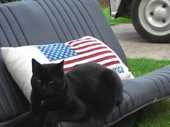 My cat UFO (toomuchdolls) Tags: black animal cat kat chat ezel citroen ufo 2cv dier poes mule