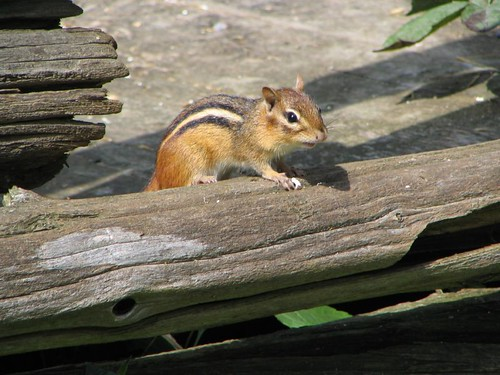 Another view of the Chipmunk