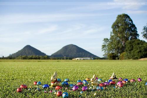Bunnies amongst the 'eggs