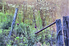 The forgotten fence (Tabbie-cats) Tags: wood vacation plant color texture nature field rural canon fence interesting weeds pretty decay farm kentucky ky country farmland wildflowers unusual soe hdr rockyhill naturesfinest abigfave shieldofexcellence impressedbeauty aplusphoto