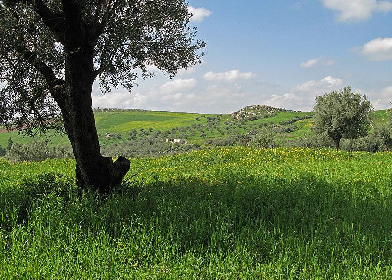 تونس الخضراء 476183548_828a80ecb8
