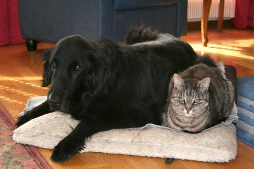 Ystävykset 1 Ystävykset