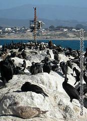 Monterey 14©