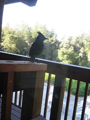 "bird outside • <a style=""font-size:0.8em;"" href=""http://www.flickr.com/photos/70272381@N00/485649962/"" target=""_blank"">View on Flickr</a>"