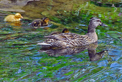 family reflections - by Steve took it