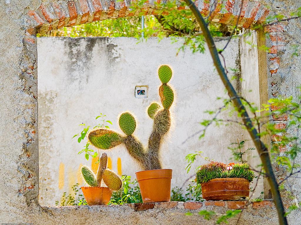 Window to Sterling Dickinson's Jardín