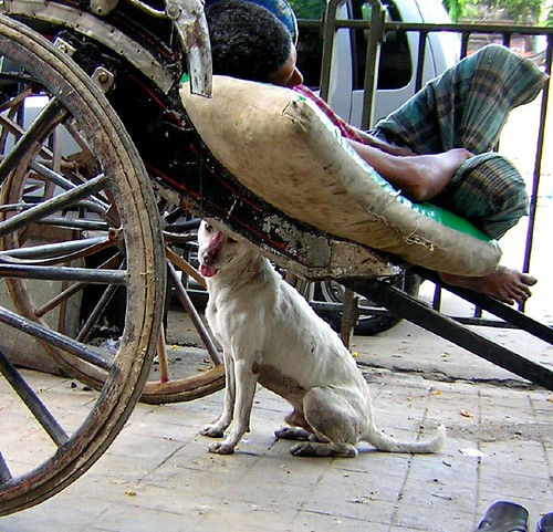 The rickshaw puller's dog