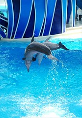 Blue Horizons Show (Helena Pugsley) Tags: usa animal florida dolphin dolphins seaworld challengeyouwinner