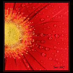 Morning Dew (Etc.Ja.An) Tags: red flower macro droplets searchthebest interestingness1 award explore daisy redandblue tornado shiningstar aphoto peopleschoice beautyisintheeyeofthebeholder flowerotica flickrpoker flickrsmileys superaplus aplusphoto flickrhearts superbmasterpiece globalvillage2 lunarvillage empyreanflowers searchandreward heartsawards colorgarden051307 mywinnersphoto thegoldenmermaid etcjaan
