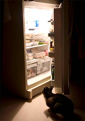 Cat looking at a refrigerator