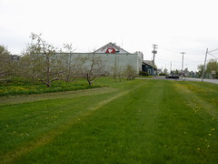 Chazy Orchards