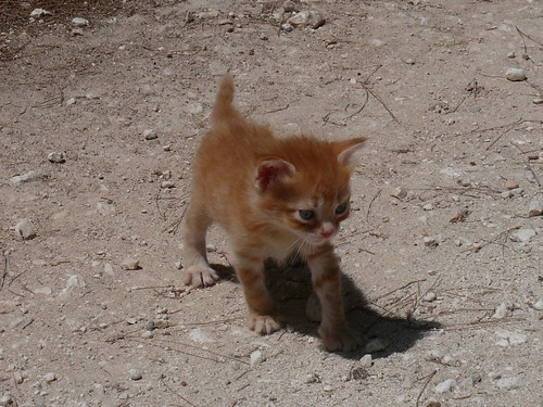 Kitten, Zakinthos, Greece