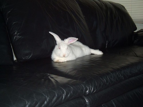 gussy on the couch