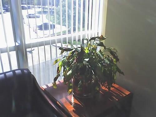 dead_plant