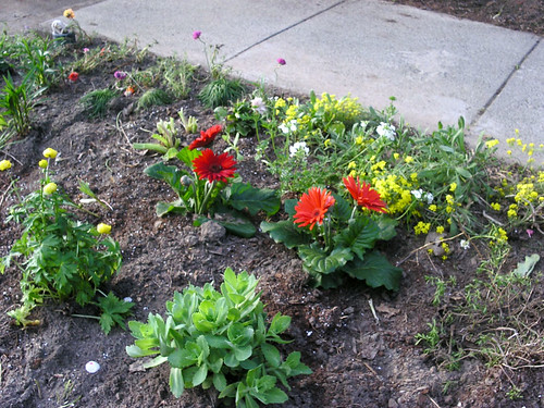 Some annuals planted on Saturday