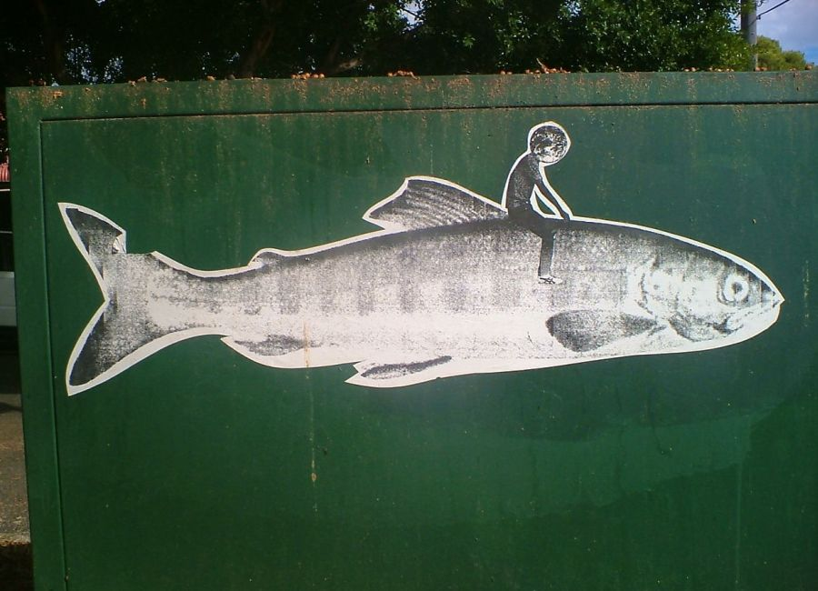 ride a fish