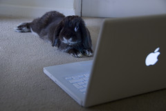 On the internet no-one knows you're a rabbit (Myxi) Tags: pet cute rabbit bunny apple conejo coelho windowsxp lapin kaninchen coniglio dualboot intelmacbook myxi abigfave bunnybook