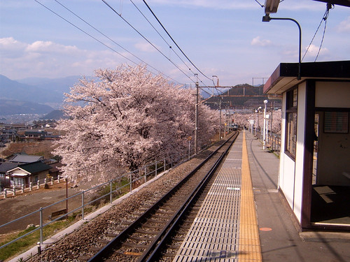 Sakura and railway station beautiful