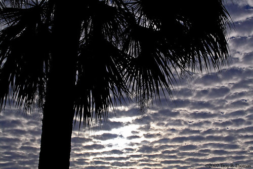PalmTreeMorningClouds