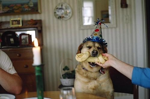 dog with bone 2