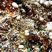Al Pollock Photo 3