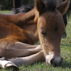 pony at rest