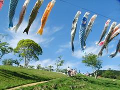 千葉県 酪農のさと 泳ぐこいのぼり