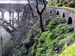 Nature & Human landscaping (p medved) Tags: road travel bridge trees vacation fern nature stone oregon fence puente moss rail ponte most pont brug brcke pnw columbiarivergorge shepherdsdell