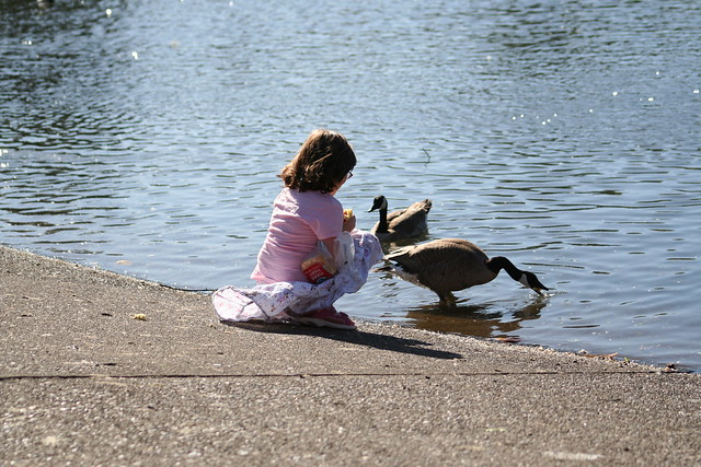 Little Girl feeds the birds