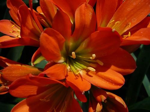 flower_50580