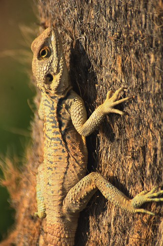 Lizzard in a tree