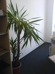 20070521 palme