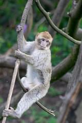 I is Tarzan