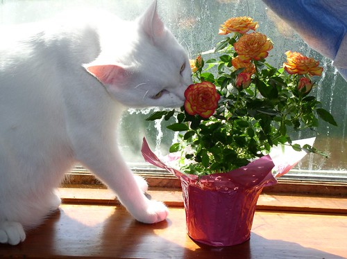 Smudge with Flowers (2)
