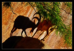 The Shadow (mac_raw) Tags: shadow fab color animal bravo searchthebest interestingness2 180mm supershot magicdonkey beautyisintheeyeofthebeholder outstandingshots flickrsbest animalkingdomelite mywinner abigfave nikond80 shieldofexcellence anawesomeshot superaplus aplusphoto flickrplatinum lookslikedancing superbmasterpiece goldenphotographer diamondclassphotographer invitedpp bratanesque macraw phoenixnomad youarealwayssexygirlfriend suchastud