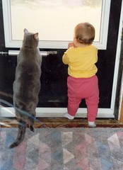 Equal in stature (kevin dooley) Tags: door cats cute minnesota kids standing cat waiting creative minneapolis commons screen maeve dooley stature atticus equal