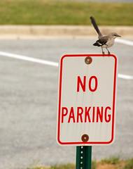 no parking (brents pix) Tags: bird sign d50 nikon funny pix no parking brent mocking brents 18200vr brentspix