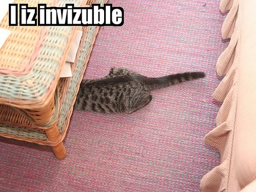 invisible LOLcat, not really ~_^