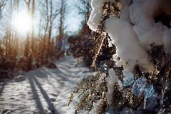 (Benedetta Falugi) Tags: snow winter trees tree sunshine walking white wood shootingfilm istillshootfilm ishootfilm film filmisnotdead filmphotography fujisuperia prakticamtl5 analog analogue analogphotography air pure beliveinfilm benedetafalugi tuscany flair blue water ice